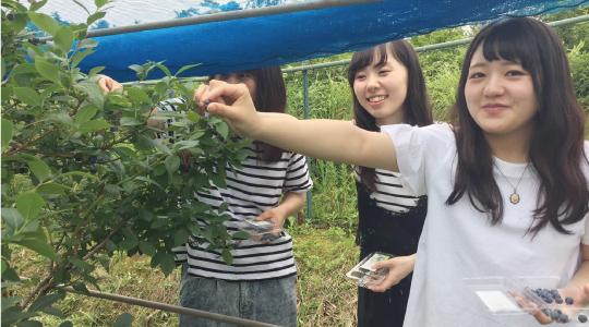 県産ブルーベリーの収穫体験