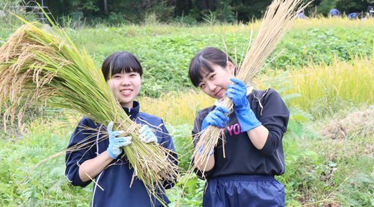 食育実習・稲刈り