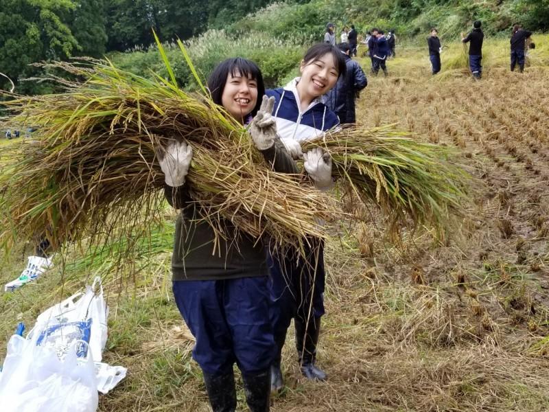 1年調理系食育実習(稲刈り)2019.9.24_190925_0014