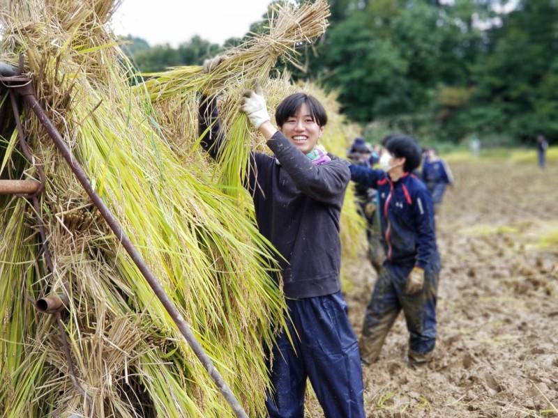 食育実習(稲刈り)2020.10.6_201007_34
